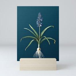 Vintage Flower Scilla Patula Botanical on Teal Mini Art Print