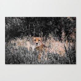 Cheetah Cheetah Canvas Print