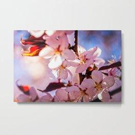 Mix Of Pink Sakura Flowers. Play Of Sunlight And Shadows Metal Print
