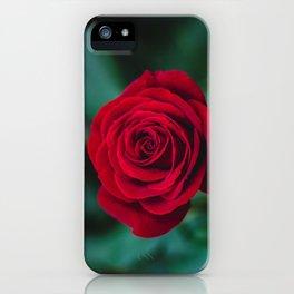 Romantic Red Rose iPhone Case