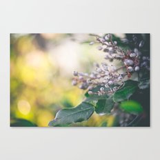 wonderful world Canvas Print