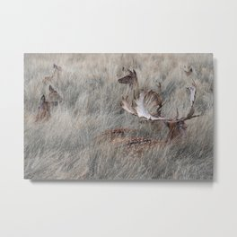 Richmond deers Metal Print