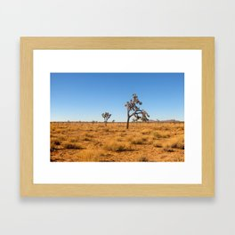 Joshua Tree 002 Framed Art Print