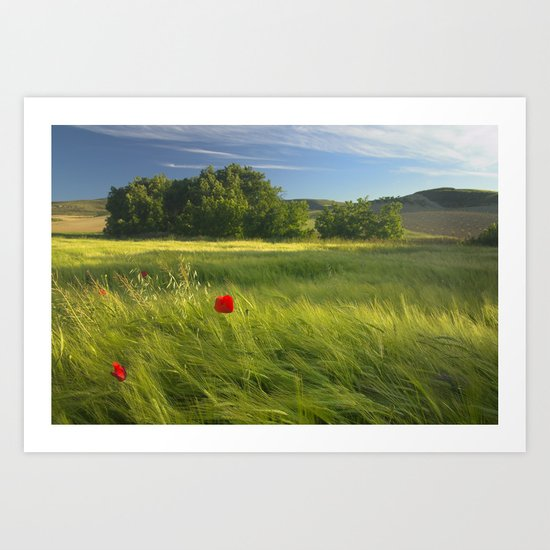 lonely poppies at the fields Art Print