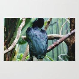 Female Hornbill Rug