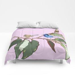 Splendid Fairy-wren Malurus splendens Comforters