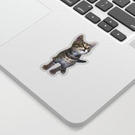Tabby Kitten Sticker