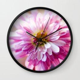 Padre Cerise Belgian Mum Alternate Focus Wall Clock