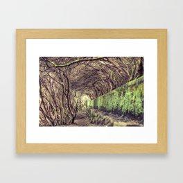 The living forest Framed Art Print