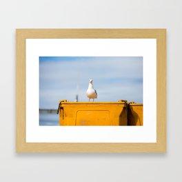 Sea gull Framed Art Print