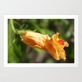 Yesterday's Flower Art Print