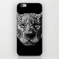 pitbull iPhone & iPod Skins featuring Pitbull by BIOWORKZ