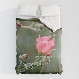 Pink Desert Globemallow Flowers Comforters