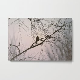Bird and branches Metal Print