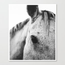 SILVER HORSE Canvas Print