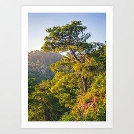 Pine Tree At The Top Art Print