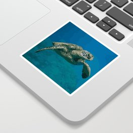 Sea Turtle Ocean blue Water Sticker