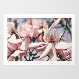 Magnolia Apollo Art Print