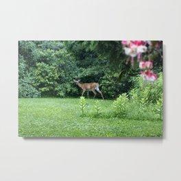 Caught Unaware (Deer) Metal Print