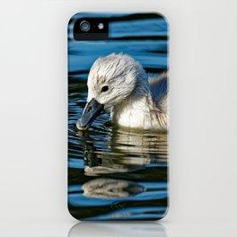 Mute Swan Cygnet iPhone Case