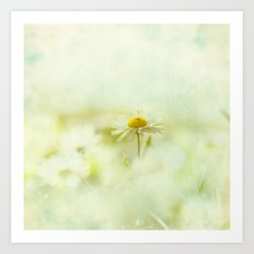Lone Daisy Art Print