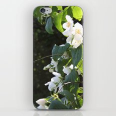 Spring Glow iPhone & iPod Skin