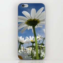 Daisy Flowers, Petals, Blossoms - White Green iPhone Skin