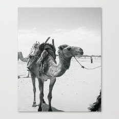 Morocco - print - travel - wanderlust - black and white - camel - animal - dromedary - desert Canvas Print