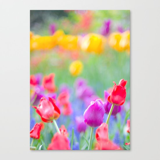 Soft Tulips Canvas Print