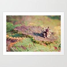 pine cone 016 Art Print