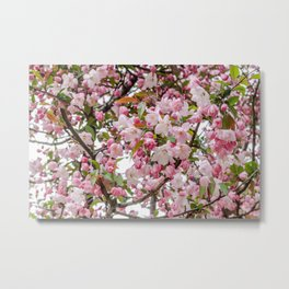 Tree in Blossom Metal Print