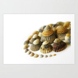 Shell Spiral Art Print