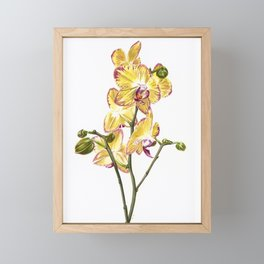 Yellow Phalaenopsis Orchid Traditional Artwork Framed Mini Art Print
