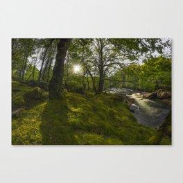 Morning River Sun Canvas Print