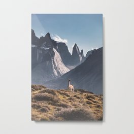 Guanaco in Torres del Paine Metal Print