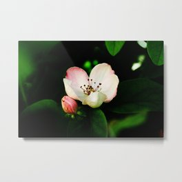 Quince Pink Flower and Bud Metal Print