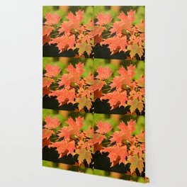 Fall Autumn Maple Leaves Red Orange Autumnal Colors Wallpaper