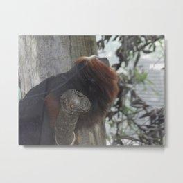 Lion-Headed Tamarin Metal Print