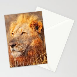 Lion in the warm sunlight of South Africa Stationery Cards