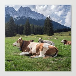 Cows in the Alps Canvas Print