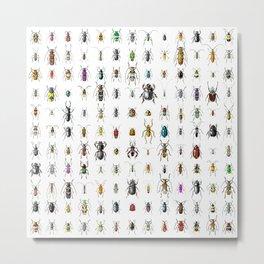 Beetlemania / Get your entomology on! Metal Print