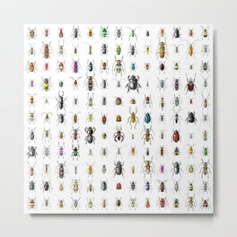 Beetlemania / Get your entomology on! Metal Print