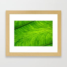 Leaf Paths Framed Art Print