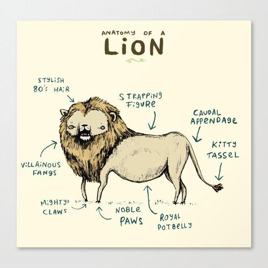 Anatomy of a Lion Canvas Print