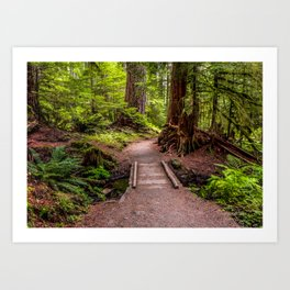 Hike to Sol Duc Falls, Olympic Peninsula, WA Art Print