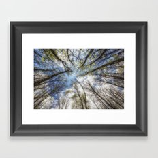 Looking up to the sky Framed Art Print