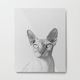 Shynx Cat Metal Print