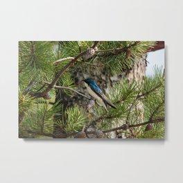 Blue Swallow Photography Print Metal Print