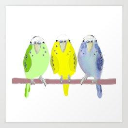 3 little parakeet Budgie Birds Art Print