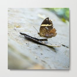 Butterfly at Poring Hot Springs Borneo Metal Print